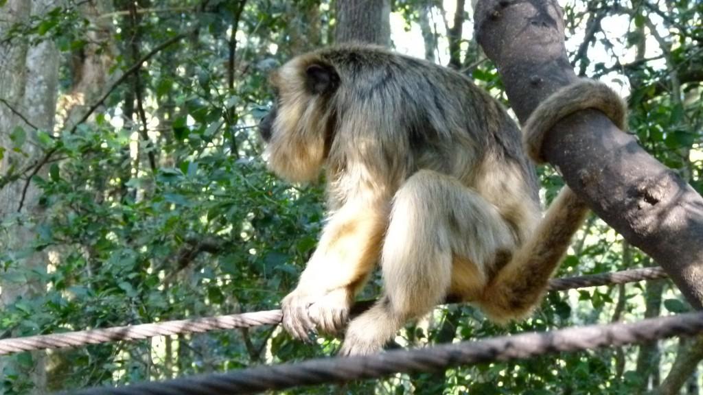 Besuch im Monkey Land